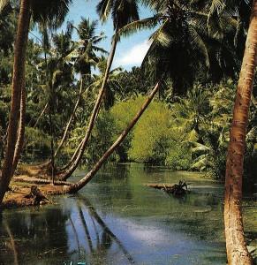 Heaven swamp blog 1