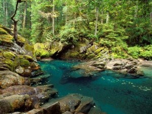 Heaven swamp blog creek 1